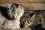 Female Cat Behavior
