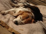 How to Deal With Nocturnal Enuresis in Dogs