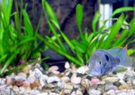 What Causes Fish to Lie at the Bottoms of Aquariums?