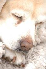 Symptoms of Malnutrition in Dogs