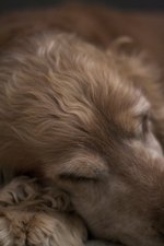 Side Effects of Clindamycin for Dogs