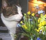 Loratadine Dosage for Cats