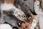 Home Remedies for Cat Itching