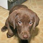 Information on Pyrantel Dog Wormer