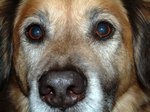 Diarrhea in Older Dogs