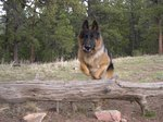 How to Certify My Dog As a Service Dog in Colorado