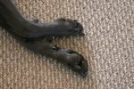 Toe Tumors in Dogs
