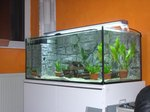 How to Make a 125-Gallon Fish Tank