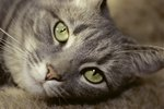 Can You Use Human Eyedrops on Cats?