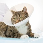 How to Treat Cat Injuries With Neosporin