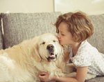 Harmful Side Effects of Frontline to Dogs & Humans