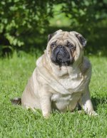 The Green Bean Diet for Dogs