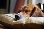 How to Keep a Dog Sleeping All Night