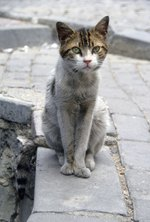 How to Get Rid of a Stray Cat