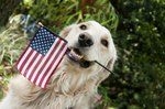 130 Patriotic Names for Pets