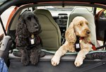 Laws on Transporting Dogs in Cars