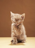 Home Remedies for Lice Treatments for Kittens