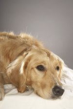 How to Treat Anemia in Dogs