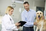 Symptoms of a Stomach Virus in a Dog