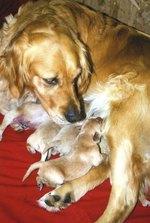 Dehydration in Newborn Puppies