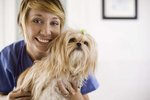 Side Effects of Prednisone Overdose in Dogs