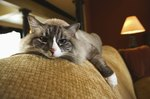 When to Put Your Senior Cat to Sleep in Renal Failure
