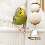 What Are the Symptoms of a Dying Canary?