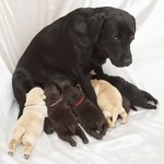 How to Encourage a Mother Dog To Feed Her Puppies