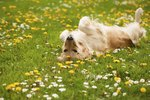 How to Give Benadryl to Dogs for Allergies