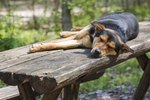 Why Do Dogs Get Sick Every Morning?