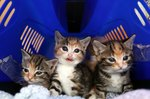 Easy Homemade Formula Recipe For Kittens