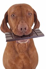 Can Dogs Safely Eat Carob?