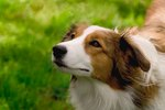 Dogs Health: Lump in a Dog's Throat