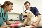 How to Treat a Dog's Ankle Sprain