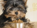 Diet for Dogs With Ulcers