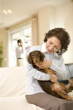 Symptoms, Prognosis & Life Expectancy for Heart Failure in Dogs