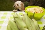 Good Vegetables to Feed Dogs