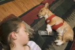 What Are the Causes of Dogs Sleeping Too Much?