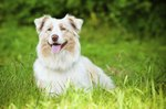 How to Treat Giardia in Dogs or Puppies