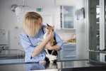 How to Spay Or Neuter Your Cat For Free