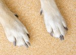 Dog Claw Infections