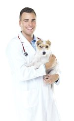 Side Effects of Cyclosporine for Dogs