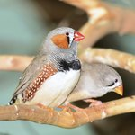 The Differences Between Male & Female Finches