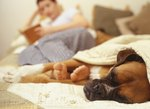 Cold Symptoms in Dogs
