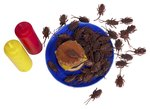 Are Roaches Bad for Dogs to Eat?