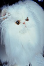 How to Get Mats Out of a Cat's Fur With Hair Conditioner