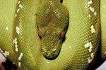 Python Snake Information