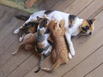 How to Care for a Mother Cat After Having Kittens
