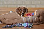 Why Use Cedar Chips for Dog Bedding?