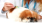 What Is the Meaning of DHLPP Vaccine for Dogs?